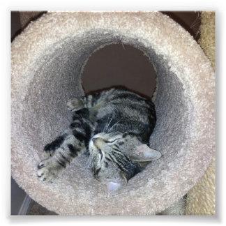 Shirleyテイラー著眠い子猫猫 フォトプリント