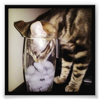 Shirleyテイラー著飲み物の盗人猫 フォトプリント