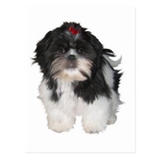 Shitzuのシーズー(犬)のTzuの小犬 ポストカード