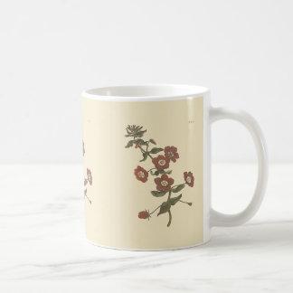 Shrubby Pimpernelの植物の絵 コーヒーマグカップ