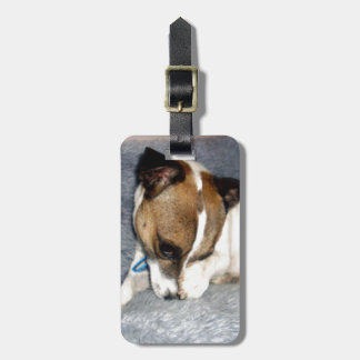 Shy_Fox_Terrier、_ ラゲッジタグ