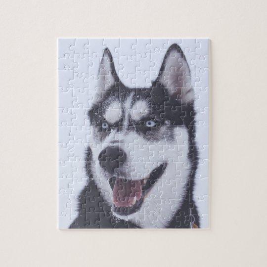 Siberian Husky ジグソーパズル