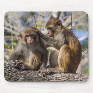 Silver Springs猿 マウスパッド