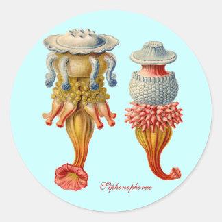 Siphonophorae -くらげのステッカー ラウンドシール