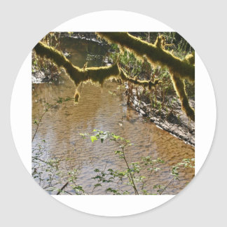Siuslawの川 ラウンドシール