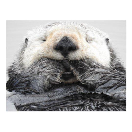 Sleeping Sea Otter ポストカード