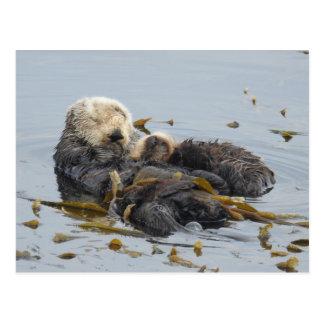 Sleeping sea otter mom and pup ポストカード