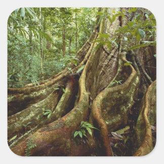 Sloaneaの木の根そしてトランク スクエアシール