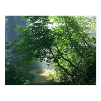 Smokey道の道の森林森 ポストカード
