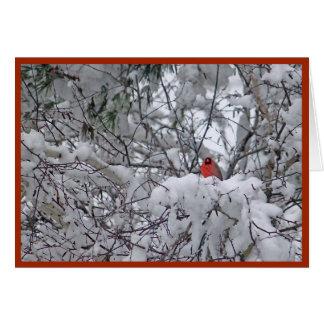 Snow Cardinal 6211-2 Christmas Card カード