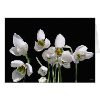 Snowdropの花の挨拶状 カード