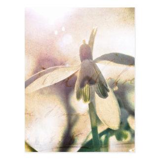 Snowdrop叙情的な01.01q ポストカード