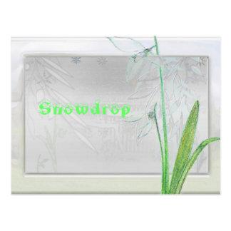 、Snowdrop ポストカード