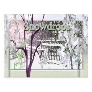 snowdrops ポストカード