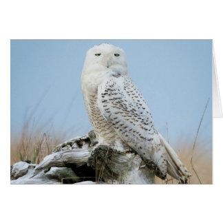 Snowyのフクロウの挨拶状 カード