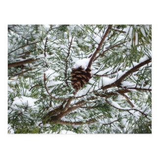 Snowyのマツ円錐形IIの冬の自然の写真撮影 ポストカード