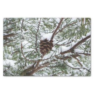 Snowyのマツ円錐形IIの冬の自然の写真撮影 薄葉紙