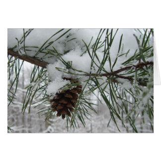 Snowyのマツ枝冬の自然の写真撮影 カード
