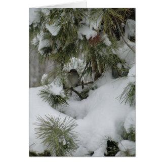 Snowyの常緑樹のすずめ カード