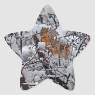 Snowyの木6206のリス 星シール
