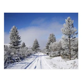 Snowyトラックおよび松の木、Stの近くのCambrians、 ポストカード