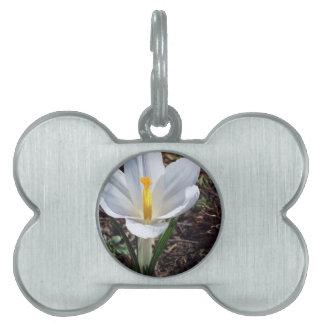 Snowy白のクロッカスの花 ペットネームタグ