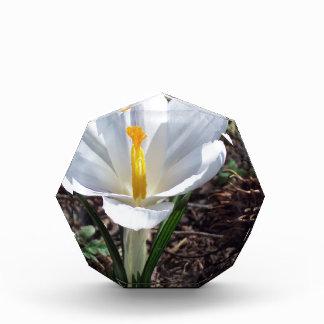 Snowy白のクロッカスの花 表彰盾