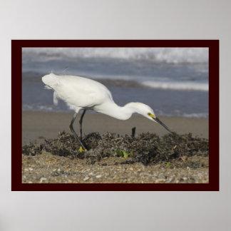 Snowy白鷺-環境のポートレート ポスター