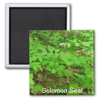 Solomonのシールの磁石 マグネット