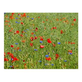 Sommerfeld mitはundをblauen Blumenをroten ポストカード