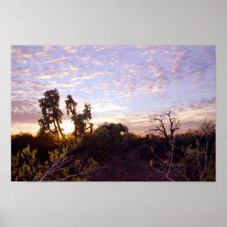 Sonoranの日没 ポスター
