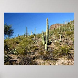 Sonoranの砂漠場面03ポスター ポスター