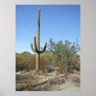 Sonoranの砂漠場面07ポスター ポスター