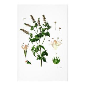 Spearmintの植物のスケッチ 便箋
