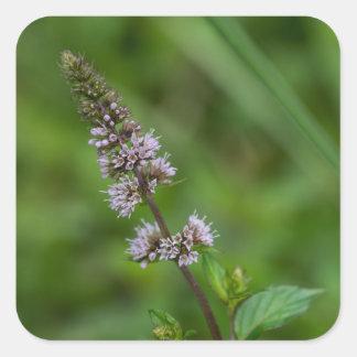 Spearmintの紫色の野生の花の花の正方形のステッカー スクエアシール