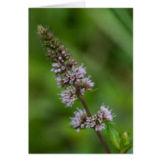 Spearmintの紫色の野生の花の花柄カード カード