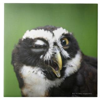 Spectacledフクロウ(Pulsatrixのperspicillata) タイル