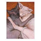 Sphynxのスフィンクス猫猫の昼寝の時間 ポストカード