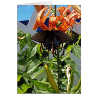 Spicebushのアゲハチョウか毎日の奇跡 カード