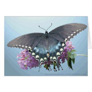 Spicebushのアゲハチョウの写真カード カード