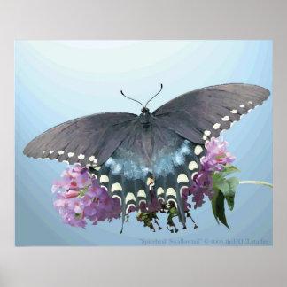Spicebushのアゲハチョウの写真ポスター ポスター
