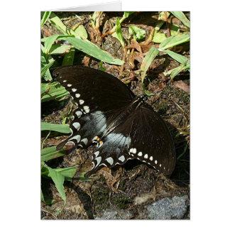 Spicebushのアゲハチョウの挨拶状 カード