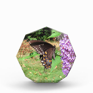 Spicebushのアゲハチョウの~賞 表彰盾