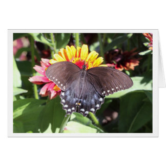 Spicebushのアゲハチョウ カード