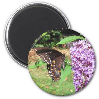 Spicebushの蝶~の磁石 マグネット