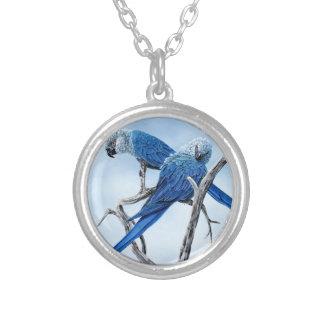 Spixのコンゴウインコ。 フィルムリオの青いオウム シルバープレートネックレス