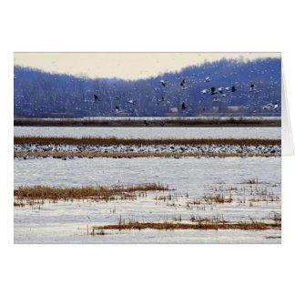 Squawの入り江の野性生物の日の出のハクガン カード