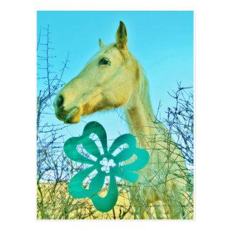 St.のパティーの日の馬 ポストカード
