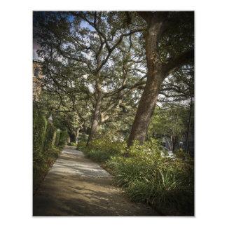 St Charlesのリブオークの木 フォトプリント