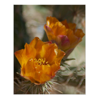 Staghorn Chollaのサボテンの花ポスター ポスター